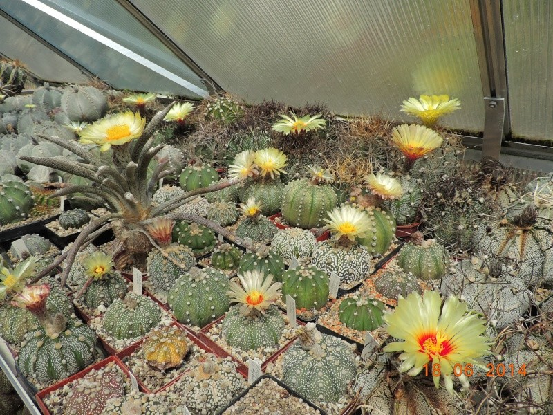 Cacti and Sukkulent in Köln, every day new flowers in the greenhouse Part 101 Bild_677