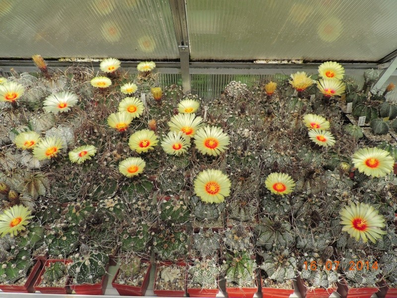Cacti and Sukkulent in Köln, every day new flowers in the greenhouse Part 101 Bild_688
