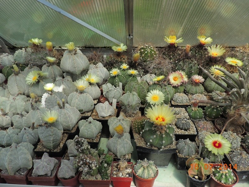 Cacti and Sukkulent in Köln, every day new flowers in the greenhouse Part 101 Bild_690