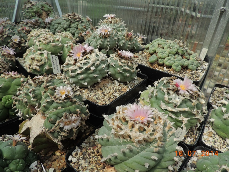 Cacti and Sukkulent in Köln, every day new flowers in the greenhouse Part 101 Bild_707