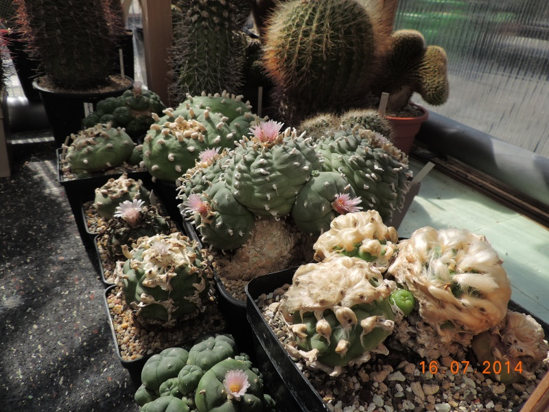 Cacti and Sukkulent in Köln, every day new flowers in the greenhouse Part 101 Bild_709
