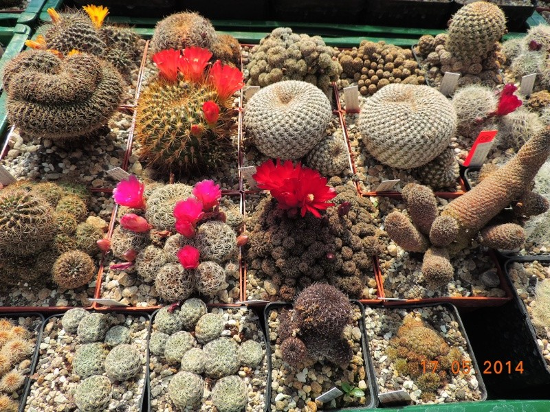 Cacti and Sukkulent in Köln, every day new flowers in the greenhouse Part 95 Bild_738