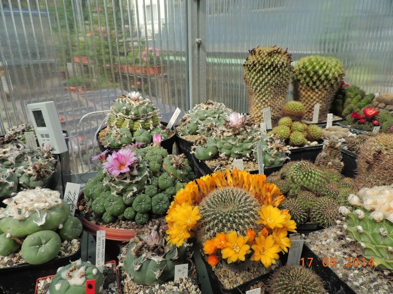 Cacti and Sukkulent in Köln, every day new flowers in the greenhouse Part 95 Bild_749