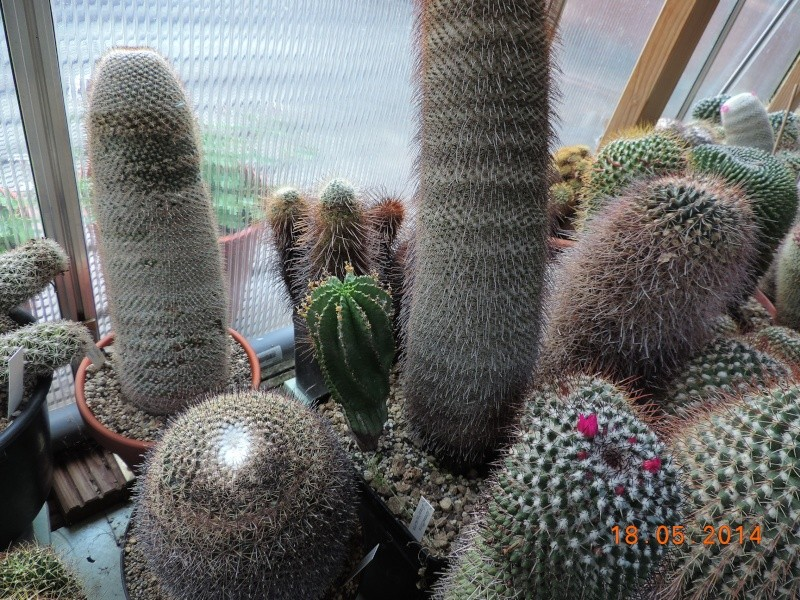 Cacti and Sukkulent in Köln, every day new flowers in the greenhouse Part 95 Bild_765