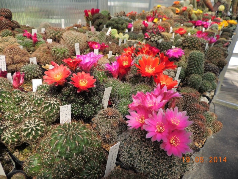 Cacti and Sukkulent in Köln, every day new flowers in the greenhouse Part 95 Bild_793