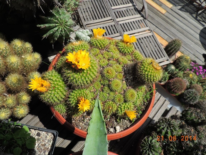 Cacti and Sukkulent in Köln, every day new flowers in the greenhouse Part 101 Bild_802