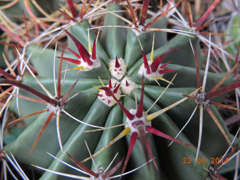 Cacti and Sukkulent in Köln, every day new flowers in the greenhouse Part 101 Bild_840