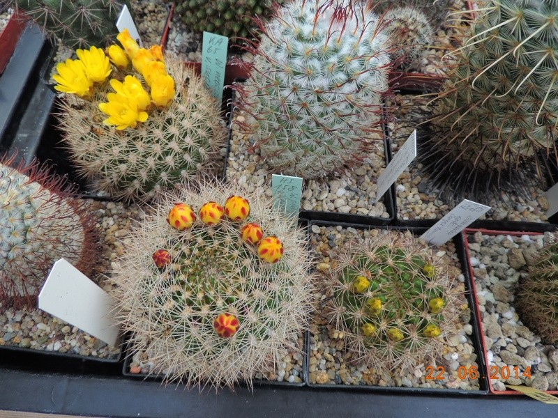 Cacti and Sukkulent in Köln, every day new flowers in the greenhouse Part 101 Bild_843