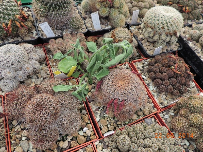 Cacti and Sukkulent in Köln, every day new flowers in the greenhouse Part 101 Bild_845