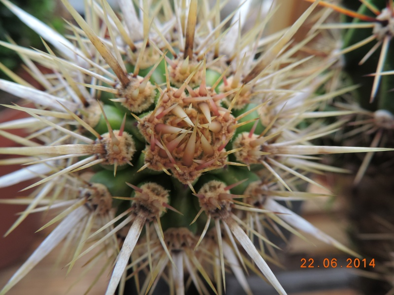 Cacti and Sukkulent in Köln, every day new flowers in the greenhouse Part 101 Bild_849