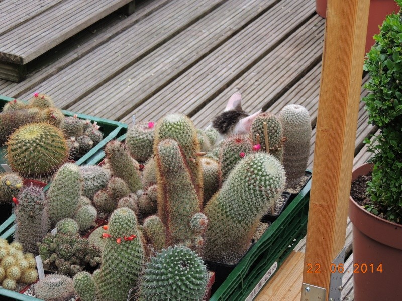 Cacti and Sukkulent in Köln, every day new flowers in the greenhouse Part 101 Bild_850