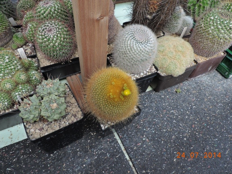 Cacti and Sukkulent in Köln, every day new flowers in the greenhouse Part 102 Bild_880