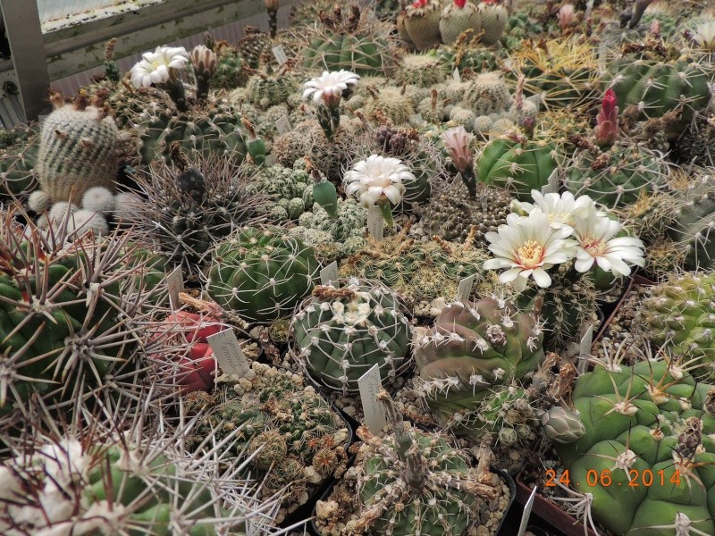 Cacti and Sukkulent in Köln, every day new flowers in the greenhouse Part 102 Bild_892
