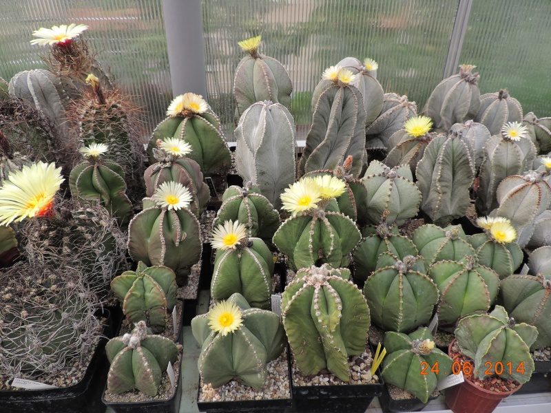 Cacti and Sukkulent in Köln, every day new flowers in the greenhouse Part 102 Bild_894
