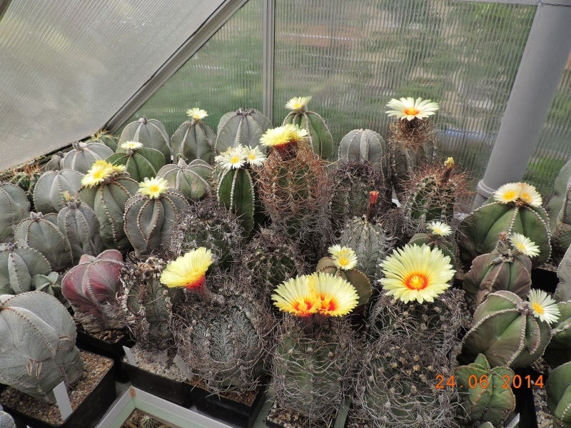 Cacti and Sukkulent in Köln, every day new flowers in the greenhouse Part 102 Bild_895