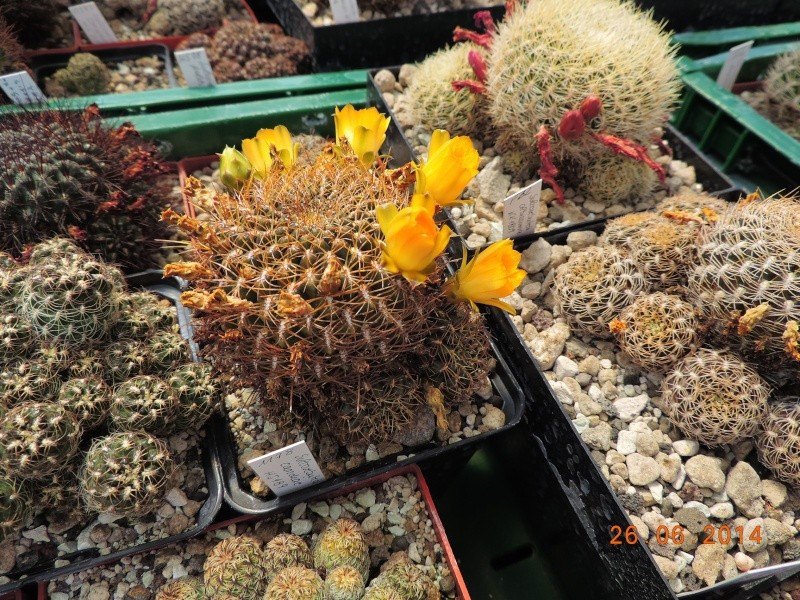 Cacti and Sukkulent in Köln, every day new flowers in the greenhouse Part 102 Bild_963