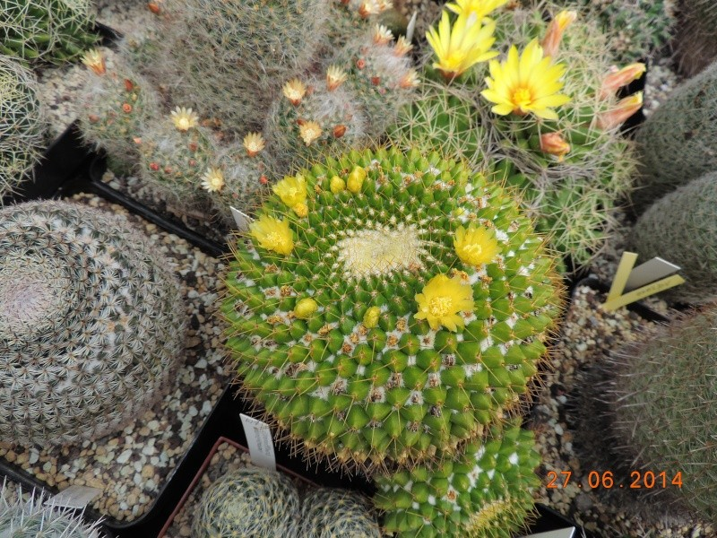 Cacti and Sukkulent in Köln, every day new flowers in the greenhouse Part 103 Bild_981