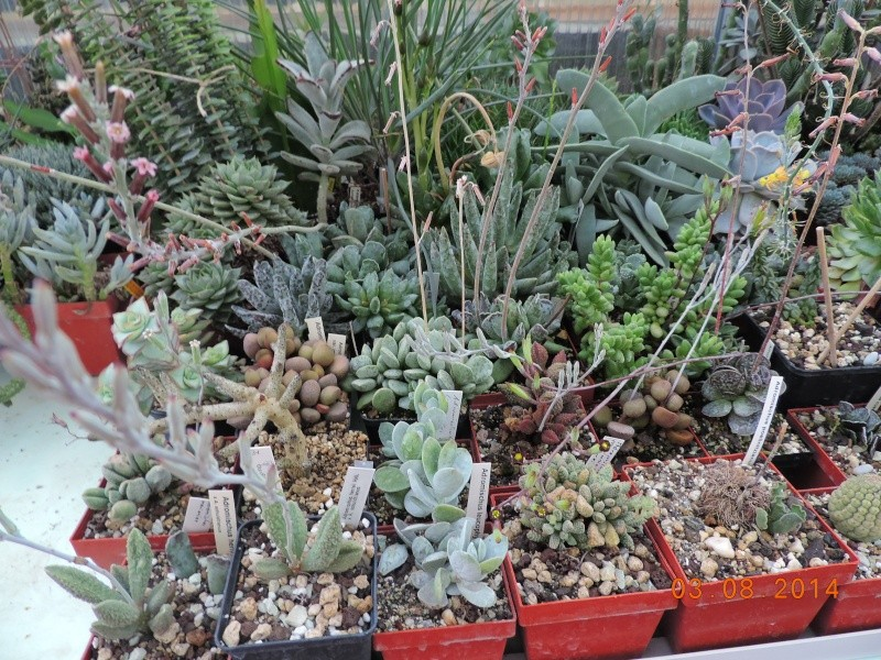 Cacti and Sukkulent in Köln, every day new flowers in the greenhouse Part 103 Bild_987