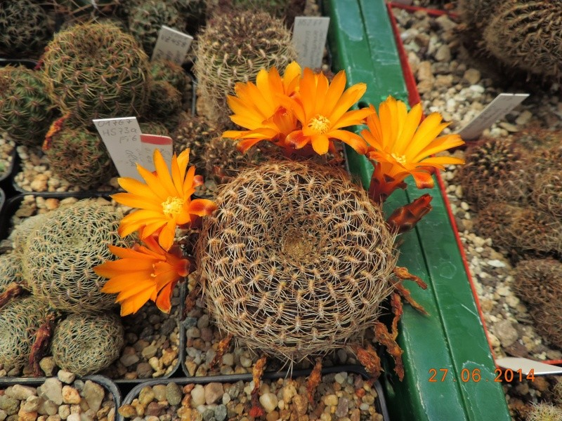 Cacti and Sukkulent in Köln, every day new flowers in the greenhouse Part 103 Bild_998
