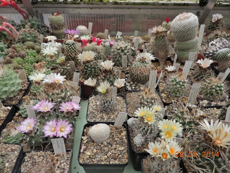 Cacti and Sukkulent in Köln, every day new flowers in the greenhouse Part 99 Dscn7910