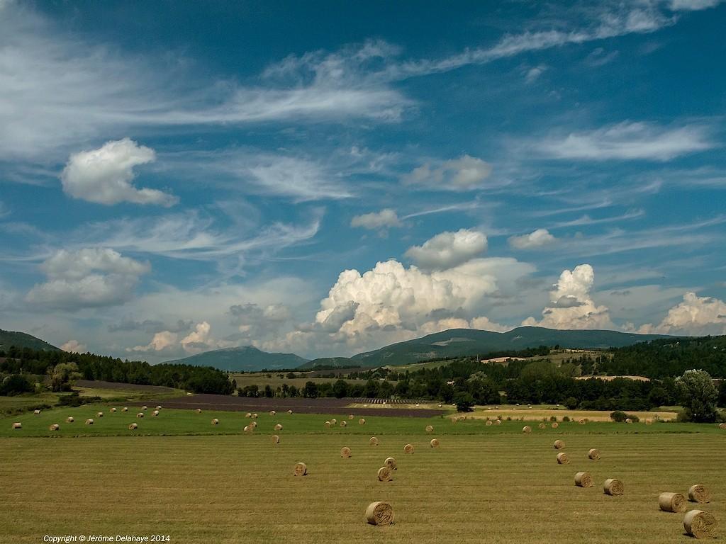 Paysages de Provence Sans_t44