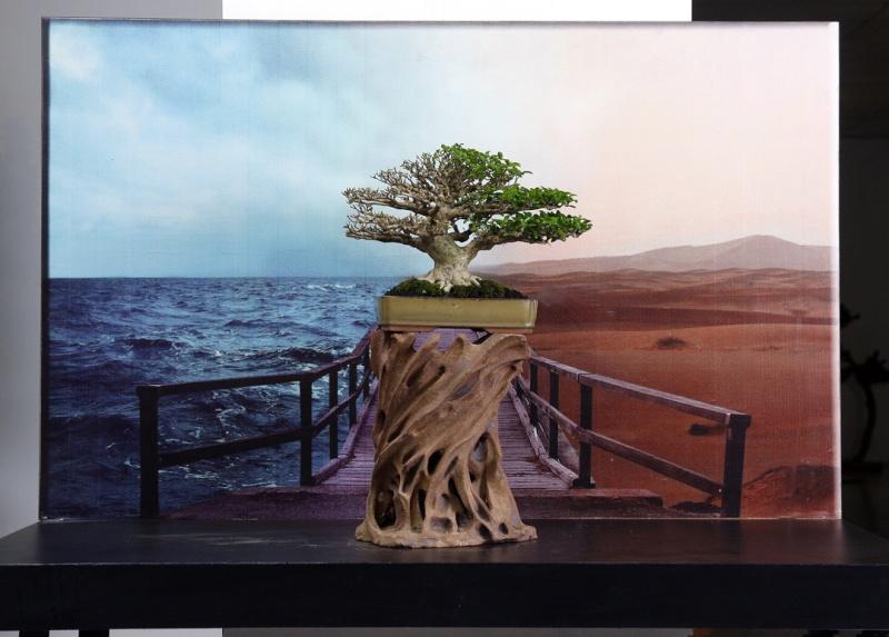 Multimedia Bonsai Presentation - IBA&CB 2014 5510