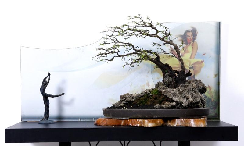 Multimedia Bonsai Presentation - IBA&CB 2014 5610