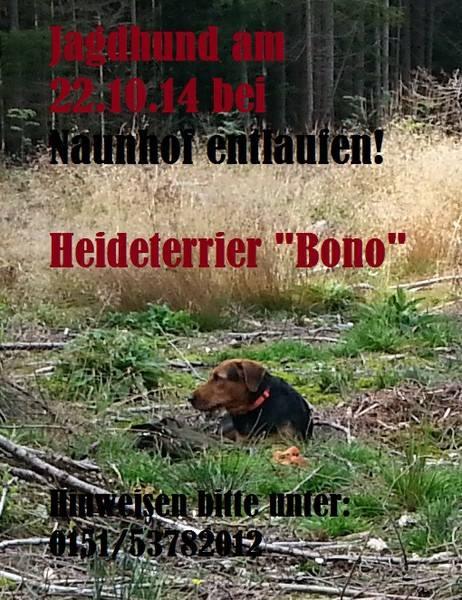 Heideterrier bei Naunhof entlaufen 10625010
