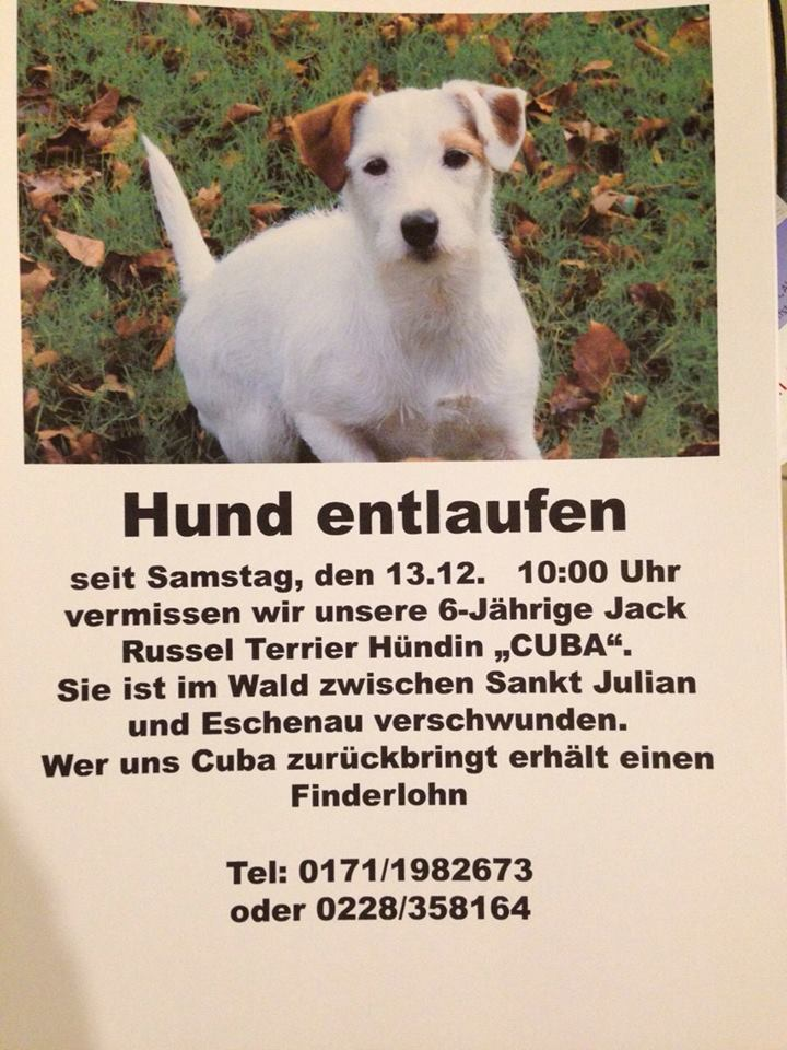 Eschenau/Sankt Julian Jack Russel Terrier entlaufen 10857810
