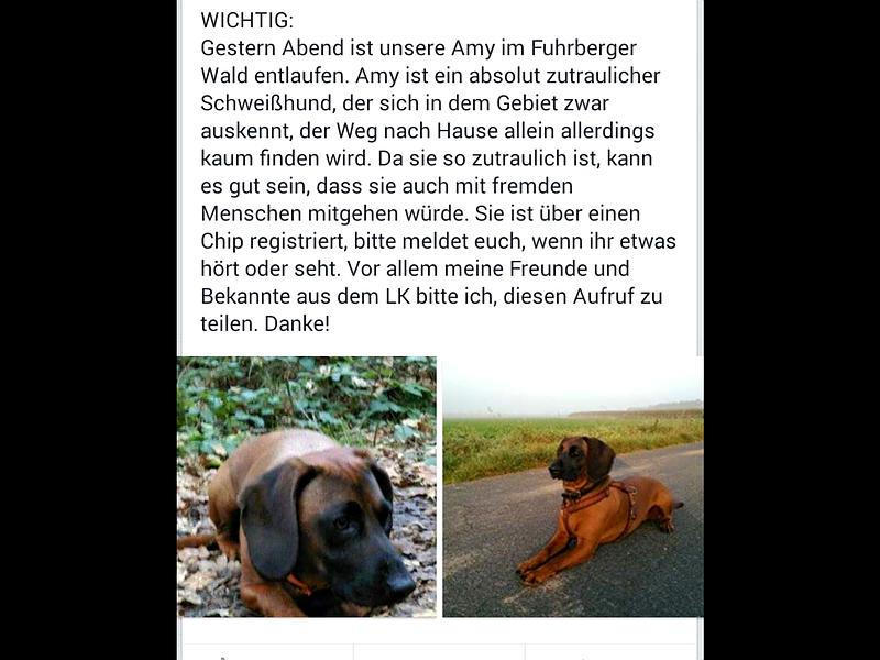 Celle/Fuhrberg: Schweißhund entlaufen 800x0-10