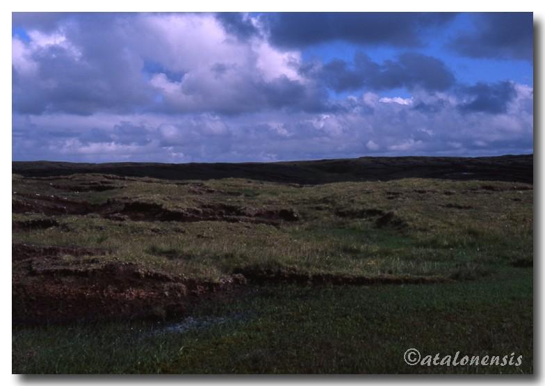 Retour sur les îles Shetland (juillet 2001) P_sche10