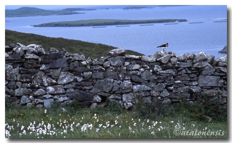 Retour sur les îles Shetland (juillet 2001) P_sche19