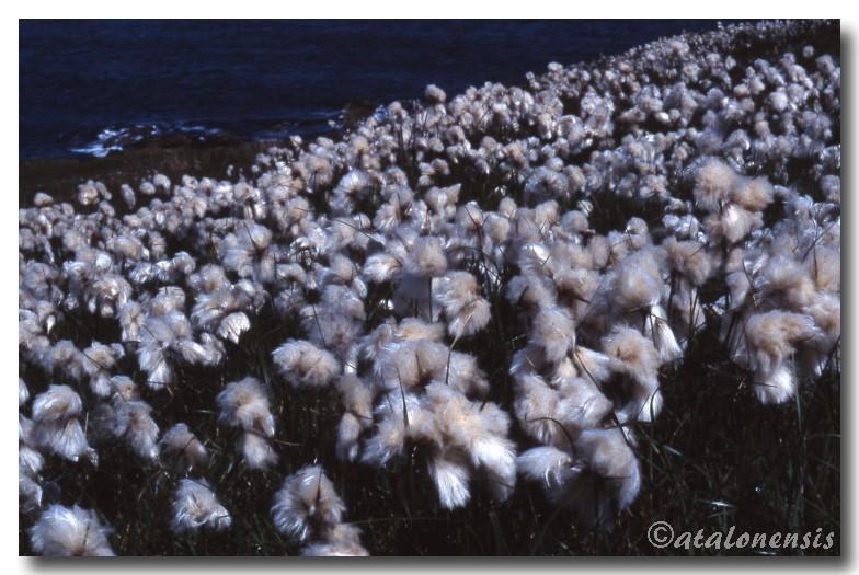 Retour sur les îles Shetland (juillet 2001) P_sche29