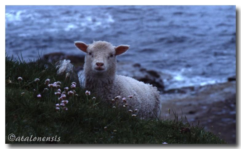 Retour sur les îles Shetland (juillet 2001) P_sche30