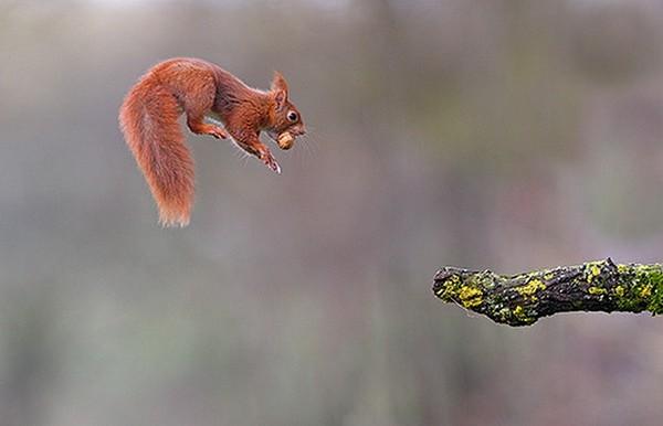 Les meilleures photos humour/tendresse animaux!  Ee5d5610