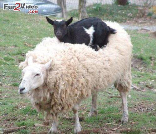 Les meilleures photos humour/tendresse animaux!  Funny-10