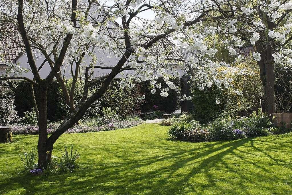 Jardinage en tout genre - Page 3 Jardin11