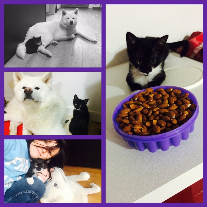 JEFFERSON, chaton mâle noir et blanc, né le 20/08/14 Img_4110