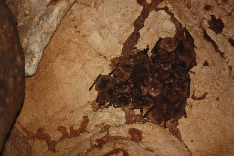 Chauves-souris d'Albanie - Page 3 Img_5010