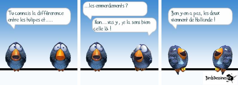 Série d'images amusantes - 24. Oiseau14
