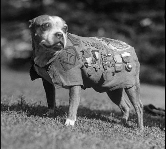 Photos rares de la Grande Guerre, seasons 2. 4810