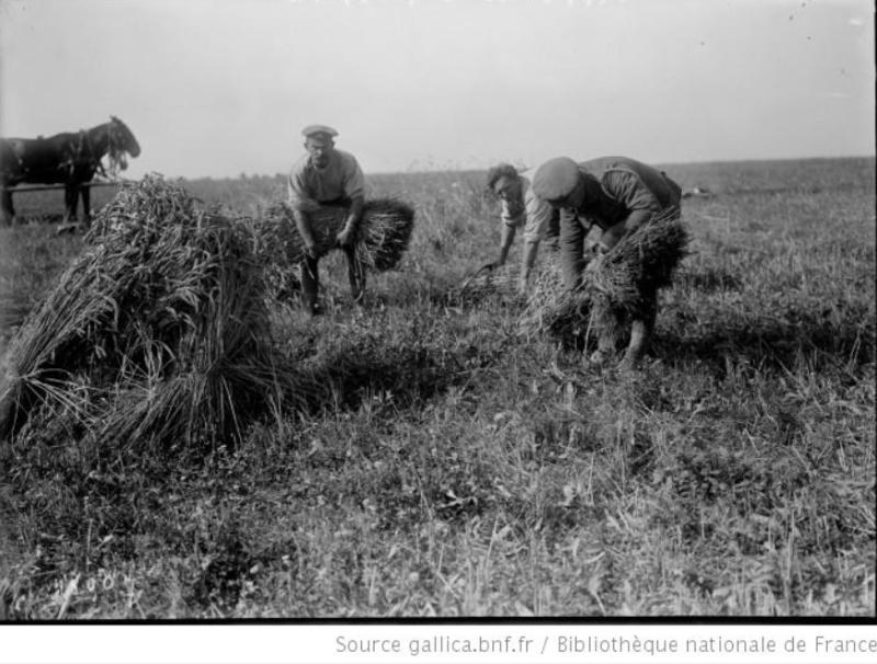 342 photos inédites de la Grande guerre !!! Gg33110