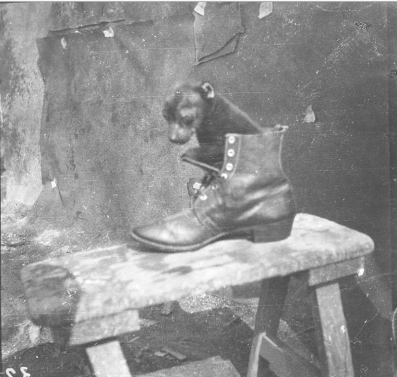 342 photos inédites de la Grande guerre !!! Gg34410