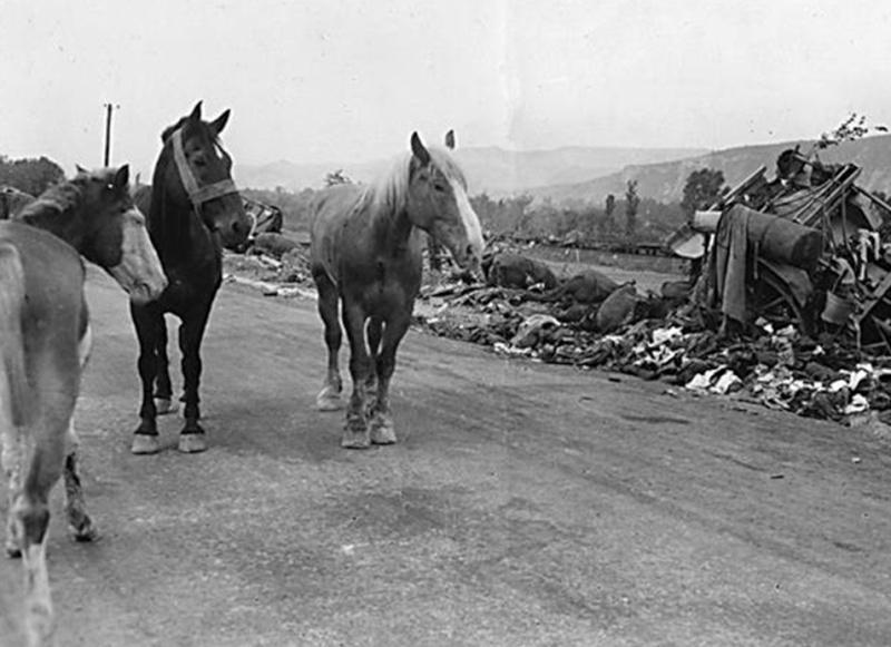 La bataille de Montélimar, août 1944. M1610