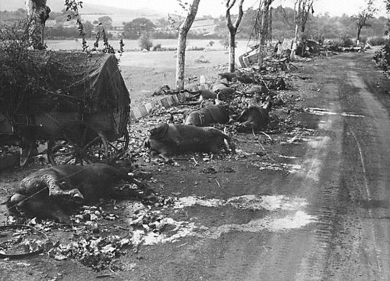 La bataille de Montélimar, août 1944. M710