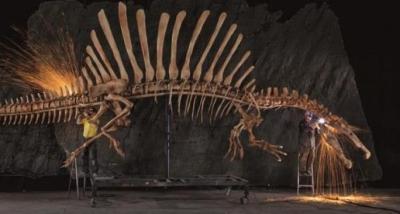 BREVES - Découverte au Maroc du fossile du 1er dinosaure semi-aquatique... Dinosa10