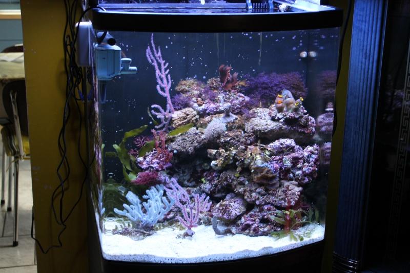 mon 130 litres pour Hippocampes Img_1211