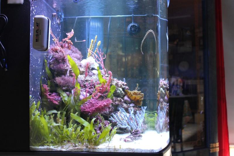 mon 130 litres pour Hippocampes Img_1323