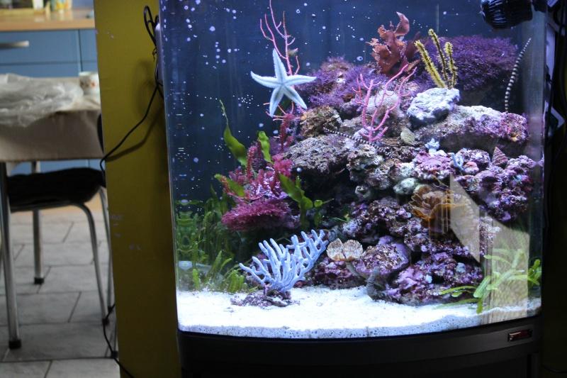mon 130 litres pour Hippocampes Img_1325