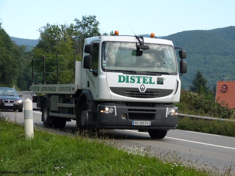 Distel (Brumath) (67) P1270117